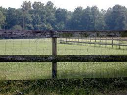Sheep 201 Fencing