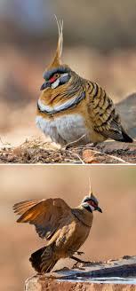 صور طيور حمام جميل صور حيوانات