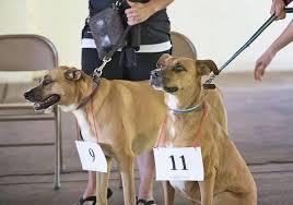 Pufferbilly Days pet show winners - News - Boone News-Republican - Boone, IA