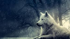 wolf images 1920x1080