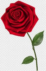 Single Rose Png Clipart Images Free Download Pngguru