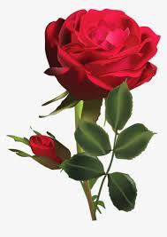 rosa roja png whatsapp dp rose
