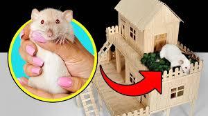 ment faire une maison pour rats à