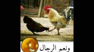 صور مضحكه باسم المحمداوي Youtube