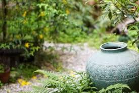 7 popular plants for japanese garden