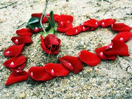 زهور الحب الحب وتبادل الورود والزهور للتعبير عن حبك احساس ناعم