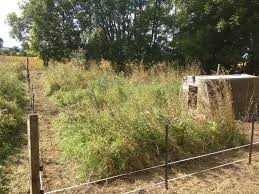 Electric Fencing For Pigs Electric Fencing Direct