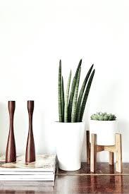 appealing modern indoor planters