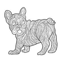 Franse Bulldog Foto S Afbeeldingen En Stock Fotografie 123rf