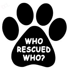 Who Rescued Who Vinyl Decal Sticker Window Wall Bumper Animal Adopt Dog Cat Paw Stickers N Sticker Chromesticker Baby Aliexpress