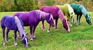 what colour suits my horse matchy