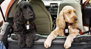 best dog car seats 2019 keep your pet