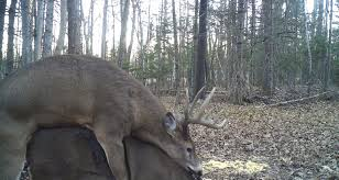 deer hunting tips how to beat the