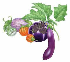 growing eggplant organic gardening