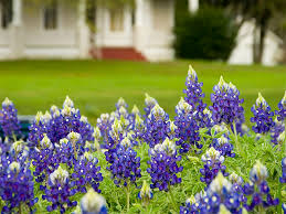 adding wildflowers to your garden