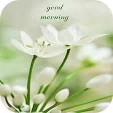 good morning flowers cards amazon fr
