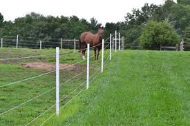 Which Fence System Is Right For Your Horses