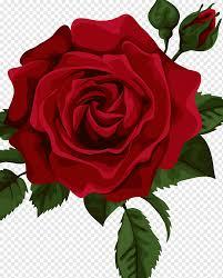 Garden Roses Sticker Decal Laptop Laptop Electronics Floribunda Sticker Png Pngwing