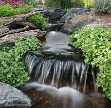 7 tips to keep pond water clean