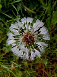 bunga es kuanas gambar 167