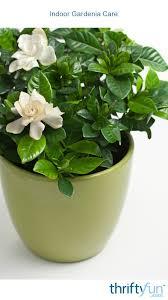 indoor gardenia care thriftyfun