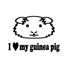 Pin On Guinea Pigs Cages