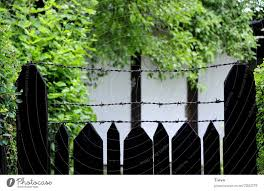 Neighbour S Mysterious Garden A Royalty Free Stock Photo From Photocase