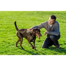 Stay Play Wireless Fence For Stubborn Dogs By Petsafe Pif00 13663 In Wireless Fences Fencing