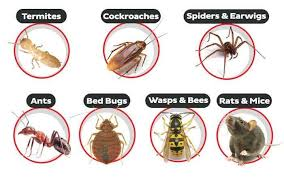 Top Pest Control Services For Paper Industry in Piran Kaliyar, Roorkee -  Justdial