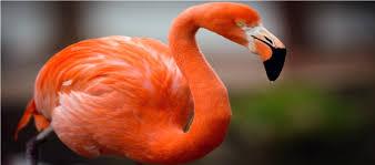 Flamingo Decals