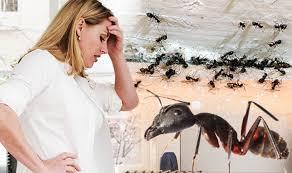 Get Best Ant Killer Uk  Pics