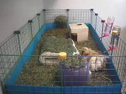 your guinea pig s home metric