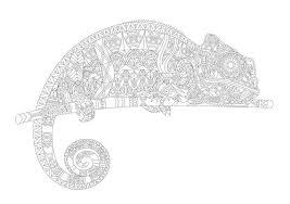 Volwassen Kleurplaat Kameleon Kleuren Print Downloadbare Etsy