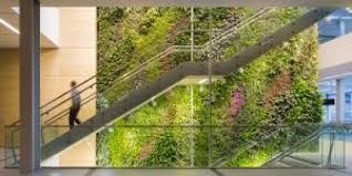 Moss Walls Versus Living Walls Which Is The Best Choice For Your Needs And Desires By The Fat Plant Society Medium