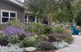 drought tolerant perennials annuals