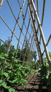 vertical supports in the vegetable