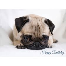 surprised pug birthday card dog