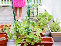 how to grow an edible garden the