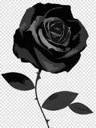 وردة سوداء Png الصور تحميل مجاني