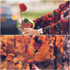 صور وردة الربيع