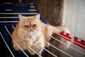 The 25 Best Outdoor Cat Enclosures Of 2020 Pet Life Today