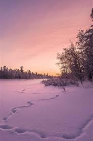 trees sunset 750x1334 iphone 8 7 6 6s