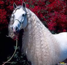 صور حصان صور خيول حصان ابيض صور الخيل احصنه خيول عربية صورميكس