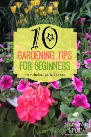 10 gardening tips for beginners the