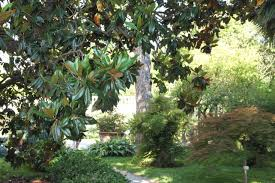 padua botanical garden orto botanico