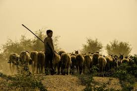 A young shepherd with his sheep at dusk - Picture of Overlander ...
