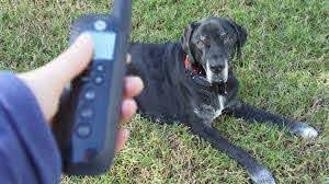 Keep Your Dog Contained With The Motorola Travelfence50 Review And Giveaway Thatmutt Com