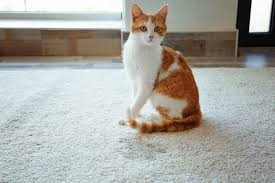 the 25 best cat urine cleaners odor