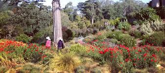 must do san francisco botanical garden