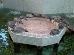 Faqs On Turtles And Other Animals For Ponds